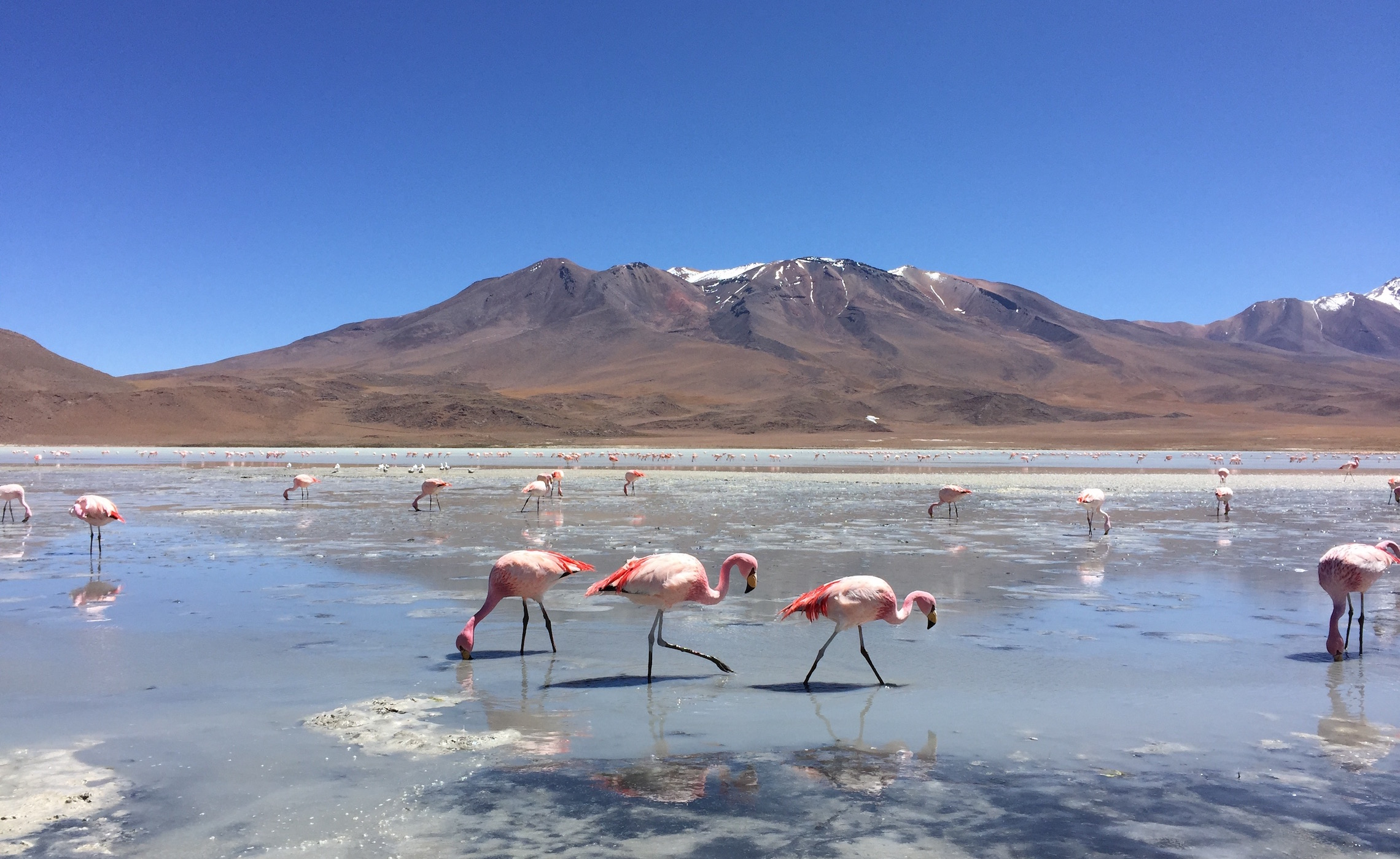 Bolivia Flamingos Salt Flat Tour