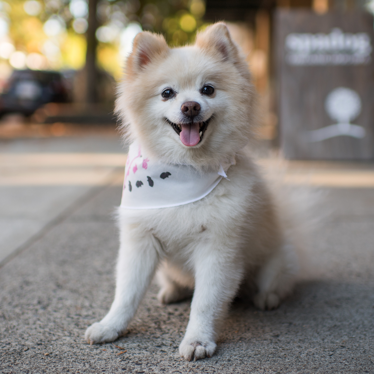 Teddy Bear's Portrait Taken by NYC's The Dogist Pet Photographer