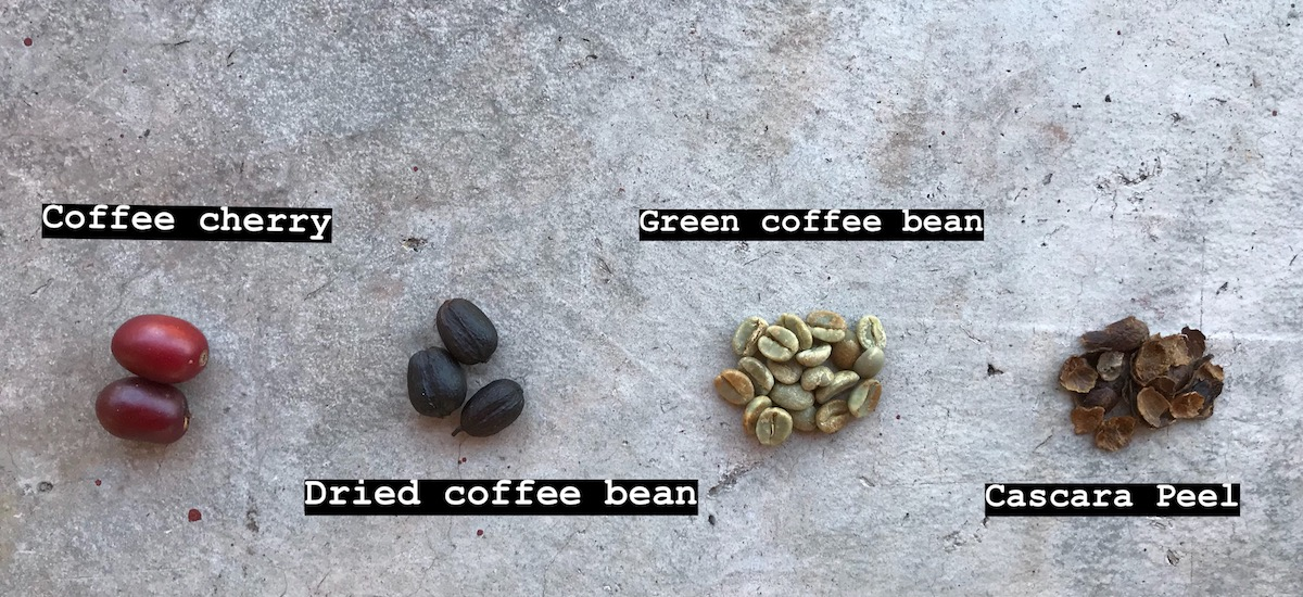 Different steps of the coffee production process