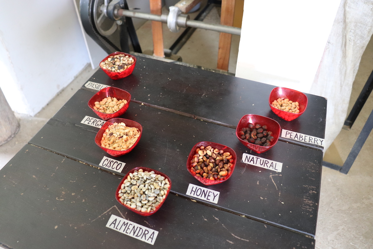 Coffee varietals and drying methods at Finca del Ocaso