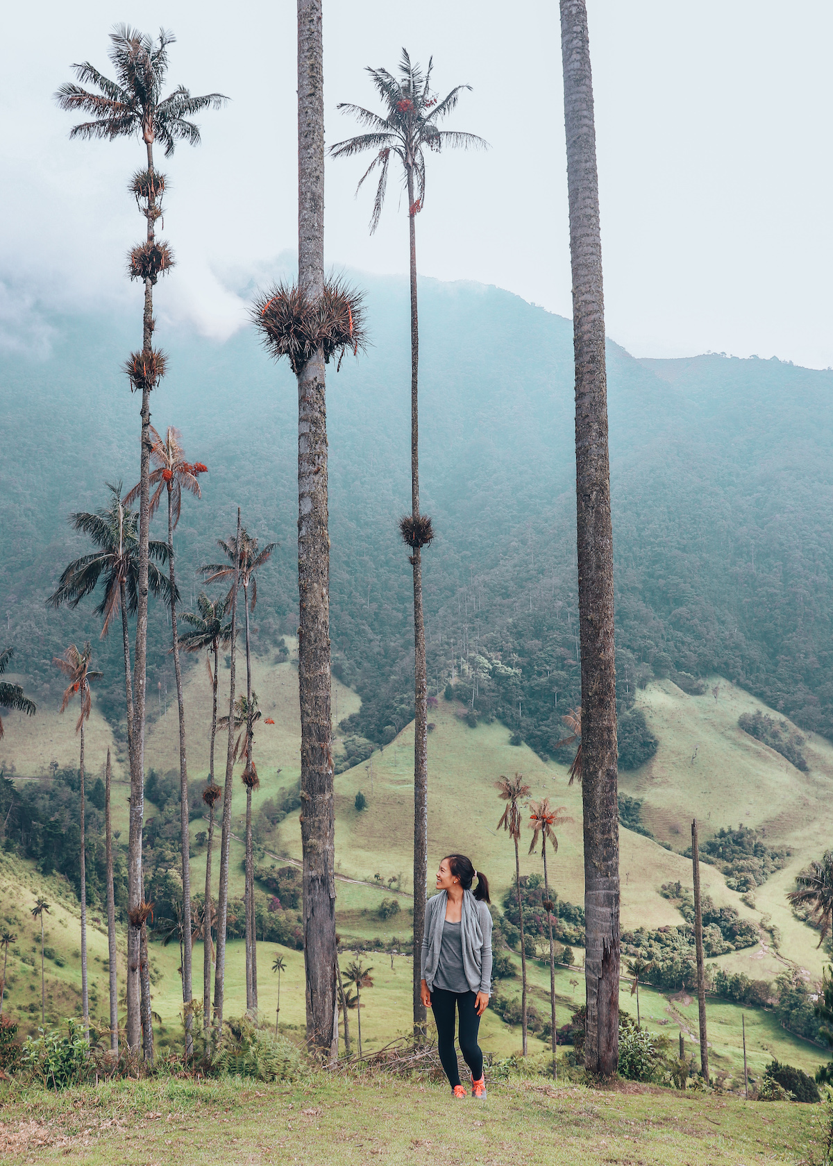 Cocora Valley Wax Palms Salento Colombia