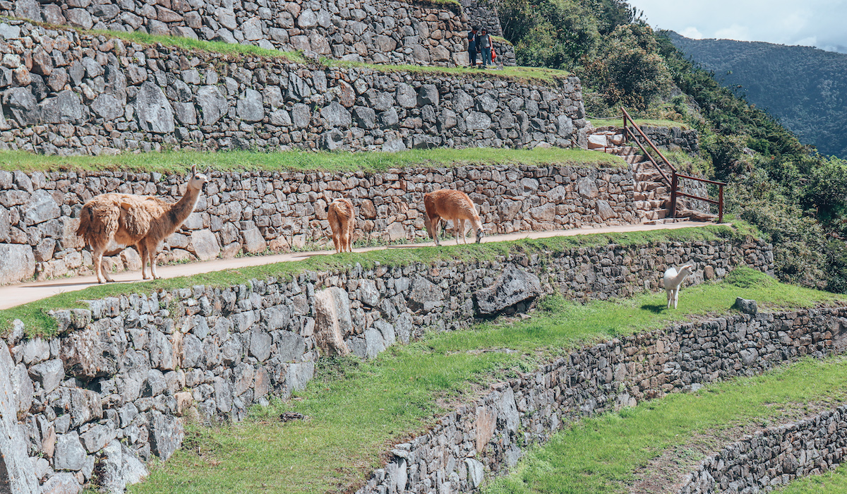 Exploring the Upper Terraces of Machu Picchu